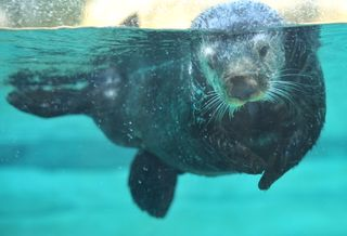 Otter1S