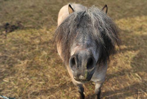 Pony1S