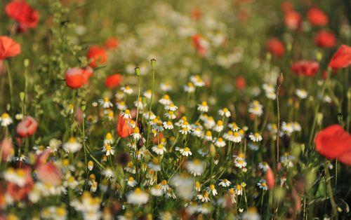 Flowers1S