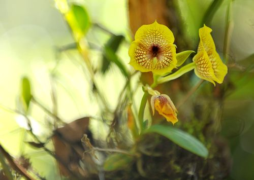 Flower2S
