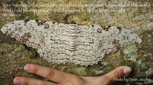 Moth quote S