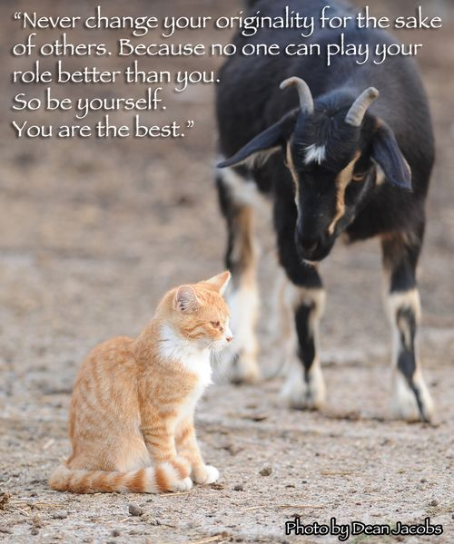 Cat goat S quote
