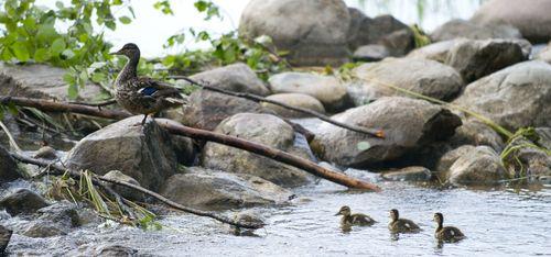 Lake Itasca Blog FB