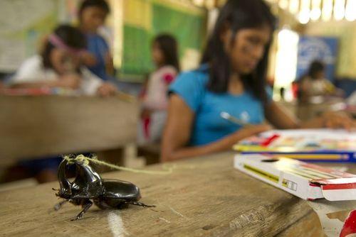 Rino Beetle 2S