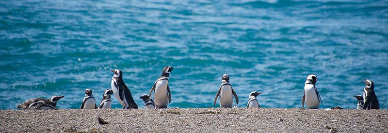 Penguin-beach-800