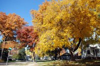 Nebraska_fall_colors_2006